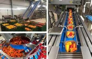 بانک کشاورزی حامی راه اندازی طرح بزرگ سورتینگ وسردخانه میوه ، صیفی جات و مواد پروتئینی در استان البرز